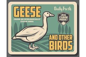 goose birds from farm, retro poster
