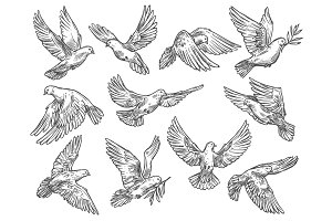 Pigeon flying with olive branch