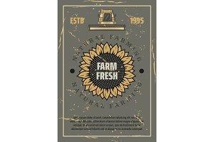 Farm. Vector sunflower and harvester