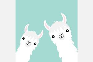 Two llama alpaca animal set.