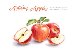 Autumn Red Apples. Watercolor