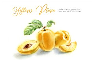 Yellow Plums. Watercolor painting