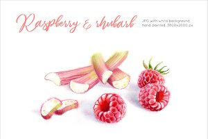 Raspberry & Rhubarb. Watercolor