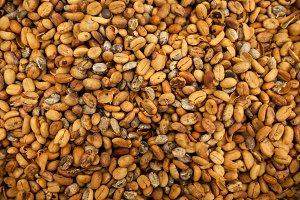 Background of coffee luwak beans
