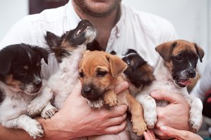 Young man holding 5 puppies