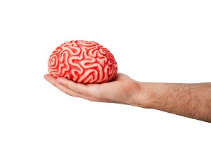 Human rubber brain in a hand