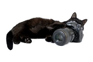 Black cat is photographer
