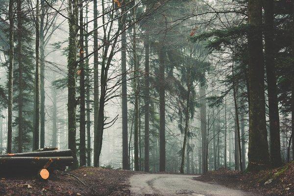 Stock Photos: Samuel Ducca - Misty path
