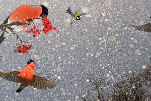 Christmas birds in a snowy beautiful