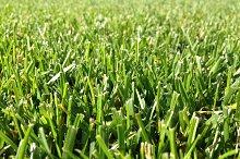 Just Cutted Grass