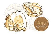 Watercolor seashells