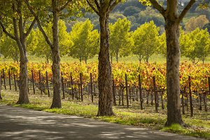 Wine country scene in Autumn