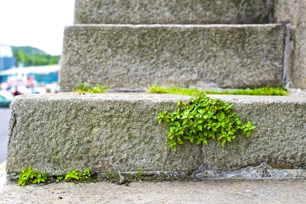 Plant growing on the stone stairs