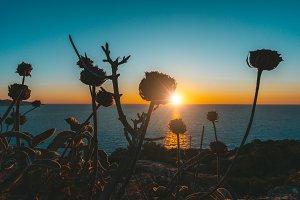 Magic golden sunset over sea horizon