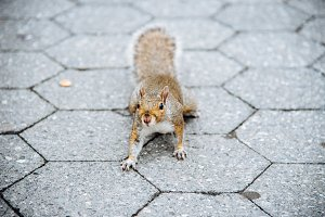 A curious squirrel posing on