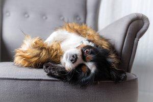 Cute dog relaxing