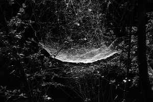 Spider Web Dark Forest