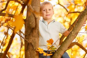 Photo of boy sitting on tree in