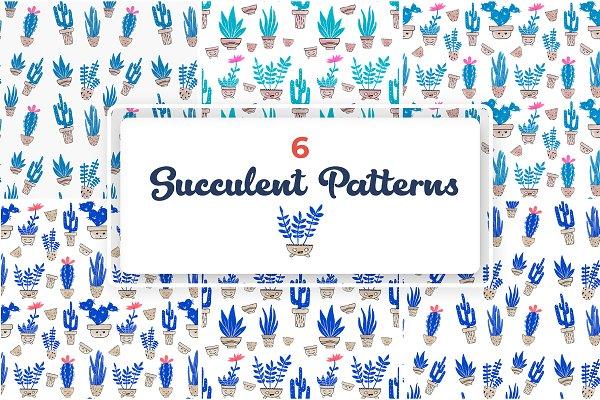 Enjoyable Succulent Patterns