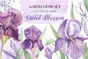 SALE! Watercolor Irises+Vector