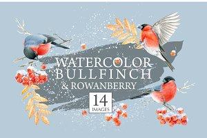 Watercolor bullfinch & rowanberry