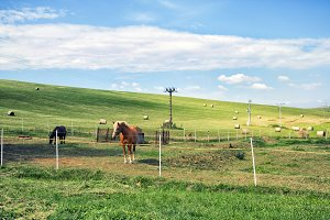 horse grazes past the fence in the m