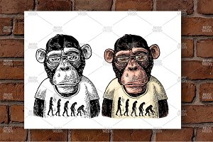Monkey theory evolution engrave