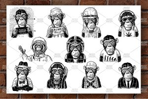Set Monkey human clothes. Engraving