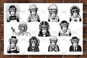 Set Monkey human clothes. Engraving