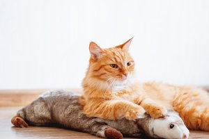 Cute ginger cat lying with toy