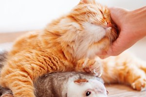 Women strokes cute ginger cat