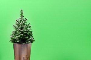 Mini Christmas tree on green