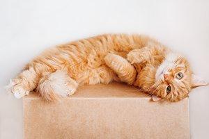 Cute ginger cat lying on box