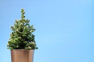 Mini Christmas tree on blue