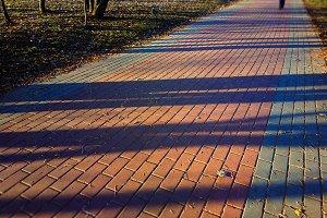 Dramatic diagonal light rays on park