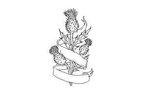 Scottish Thistle With Ribbon Drawing