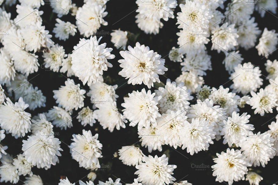 Close Up Of Beautiful White Flowers Nature Photos Creative Market