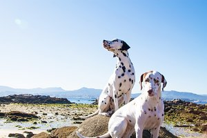 couple of dogs on the beach