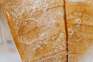 Ice tree leaf