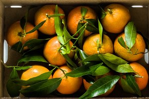 Fresh mandarin oranges fruit or tang