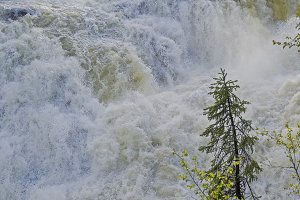 Small spruce above a large waterfall