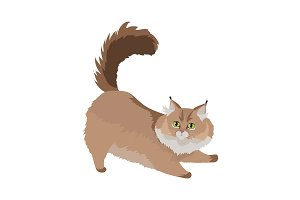 Maine Coon Cat Vector Flat Design
