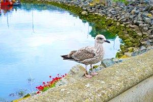 The bird beside the sea