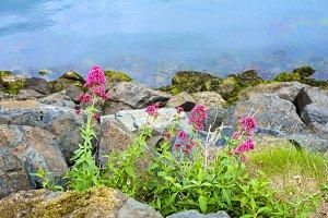 Flowers beside the sea