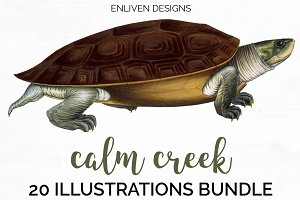 Turtle Bundle Vintage Watercolor