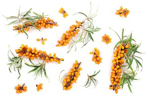 Sea buckthorn. Fresh ripe berry with