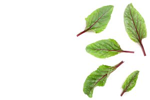 fresh beet leaf isolated on white