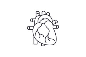 Human heart line icon concept. Human