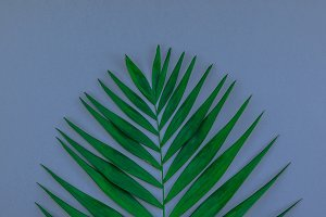 Tropical palm leaves on blue grey pa