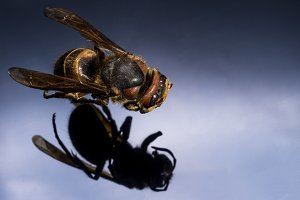 Top view wasps. Macro photo of an in